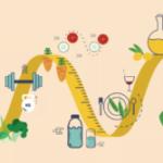 Быстрый метаболизм основные факторы
