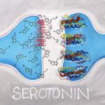 Повышаем уровень серотонина
